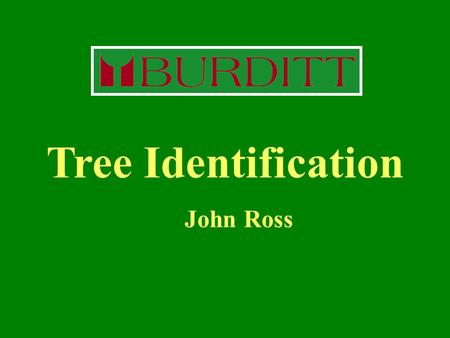 Tree Identification John Ross.