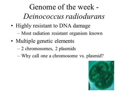 Genome of the week - Deinococcus radiodurans Highly resistant to DNA damage –Most radiation resistant organism known Multiple genetic elements –2 chromosomes,