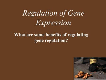 Regulation of Gene Expression What are some benefits of regulating gene regulation?