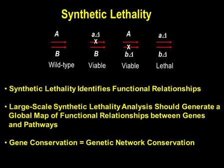 Synthetic Lethality A B aa B X A bb Viable Lethal aa bb Wild-type Viable X Synthetic Lethality Identifies Functional Relationships Large-Scale.