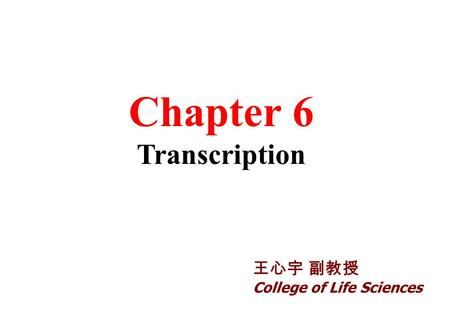 Chapter 6 Transcription 王心宇 副教授 College of Life Sciences.