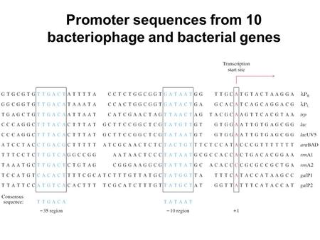 Promoter sequences from 10 bacteriophage and bacterial genes