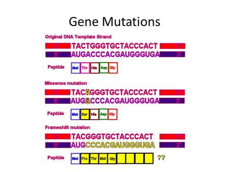 Gene Mutations. Mutation Vocabulary Gene Mutation Point Mutation – Substitution – Silent – Missense – Nonsense Frameshift – Insertion – Deletion Chromosomal.