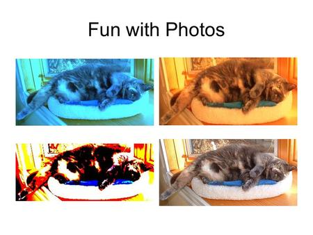 Fun with Photos. Introduction (5 minutes) Who's here? What we will cover today-- Picnik Animoto Windows MovieMaker.