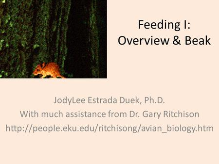 Feeding I: Overview & Beak JodyLee Estrada Duek, Ph.D. With much assistance from Dr. Gary Ritchison
