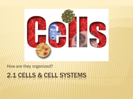 How are they organized? 2.1 Cells & Cell Systems.