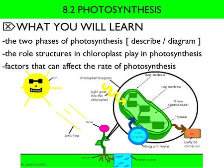 WHAT YOU WILL LEARN 8.2 PHOTOSYNTHESIS