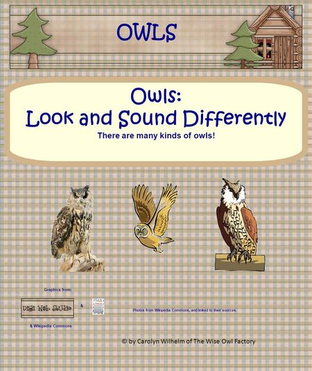 Graphics from: & & Wikipedia Commons Owls: Look and Sound Differently There are many kinds of owls! OWLS Photos from Wikipedia Commons, and linked to their.