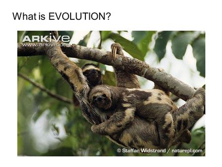 What is EVOLUTION?. Biologists consider evolution the UNIFYING THEORY OF BIOLOGY because it helps us explain and understand the DIVERSITY of life on the.