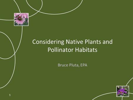 Considering Native Plants and Pollinator Habitats Bruce Pluta, EPA 1.