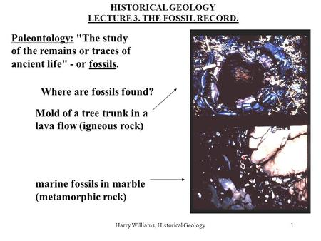 Harry Williams, Historical Geology1 HISTORICAL GEOLOGY LECTURE 3. THE FOSSIL RECORD. Paleontology: The study of the remains or traces of ancient life