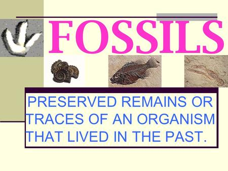 PRESERVED REMAINS OR TRACES OF AN ORGANISM THAT LIVED IN THE PAST.
