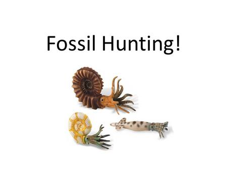 Fossil Hunting!. Which is a Belemnite and which is an Ammonite?