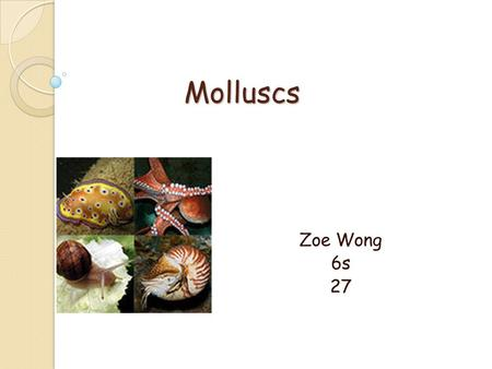Molluscs Zoe Wong 6s 27. Classification: Phylum: Mollusca The Phylum Mollusca contains the following subgroups:  Class: Aplacophora (solenogasters, deep-sea.