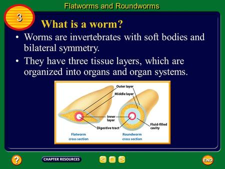What is a worm? Worms are invertebrates with soft bodies and bilateral symmetry. They have three tissue layers, which are organized into organs and organ.