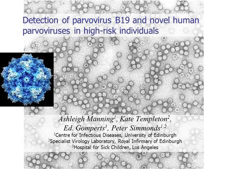 Detection of parvovirus B19 and novel human parvoviruses in high-risk individuals Ashleigh Manning 1, Kate Templeton 2, Ed. Gomperts 3, Peter Simmonds.