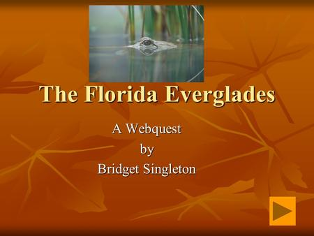 The Florida Everglades A Webquest by Bridget Singleton.