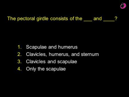 The pectoral girdle consists of the ___ and ____? 1.Scapulae and humerus 2.Clavicles, humerus, and sternum 3.Clavicles and scapulae 4.Only the scapulae.