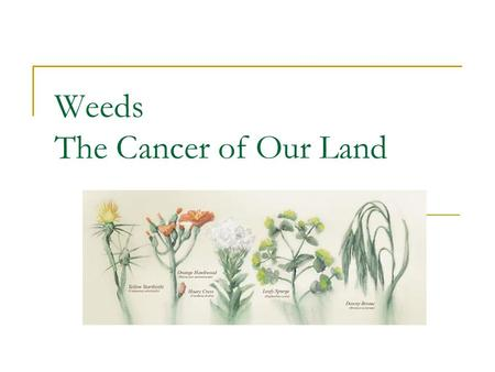 "Weeds The Cancer of Our Land. Why Care? ""The spread of noxious weeds may signal the decline of entire ecological watersheds. They severely impact the."