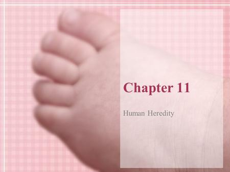 Chapter 11 Human Heredity.