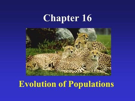 Chapter 16 Evolution of Populations. Diversity within in the human species Not a flashcard. What would we look like if all of our genes mixed?