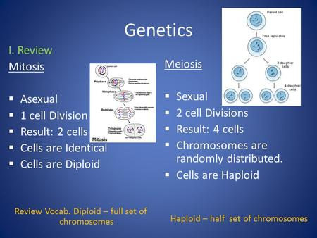 Genetics I. Review Mitosis  Asexual  1 cell Division  Result: 2 cells  Cells are Identical  Cells are Diploid Review Vocab. Diploid – full set of.