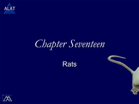 "Chapter Seventeen Rats.  If viewing this in PowerPoint, use the icon to run the show (bottom left of screen).  Mac users go to ""Slide Show > View Show"""