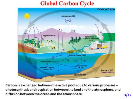 Global Carbon Cycle 3/12 Carbon is exchanged between the active pools due to various processes – photosynthesis and respiration between the land and the.