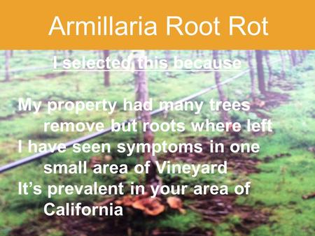 1 Armillaria Root Rot I selected this because My property had many trees remove but roots where left I have seen symptoms in one small area of Vineyard.