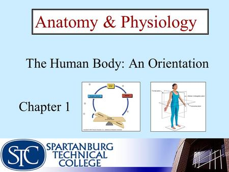 The Human Body: An Orientation Chapter 1 Anatomy & Physiology.