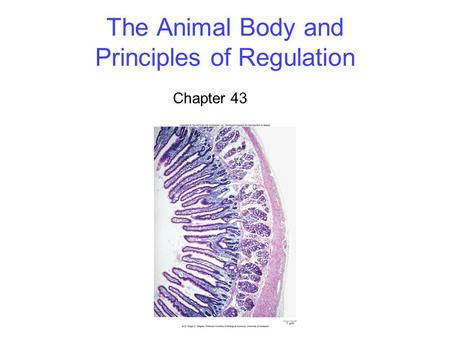 The Animal Body and Principles of Regulation Chapter 43.