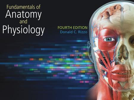 1. 2 Chapter 1 The Human Body 3 Introduction Anatomy: the study of the structure of the body Physiology: the study of the function of the body parts.
