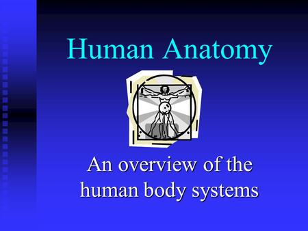 Human Anatomy An overview of the human body systems.