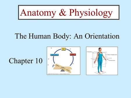 The Human Body: An Orientation