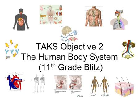 TAKS Objective 2 The Human Body System (11th Grade Blitz)