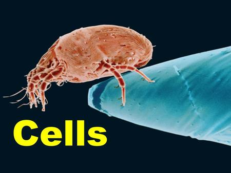 Cells. 24.1 What are Cells? Living organisms are made up of small building units of life called cells. Cells come in different shapes and sizes. Unicellular.
