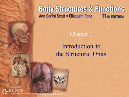 Introduction to the Structural Units