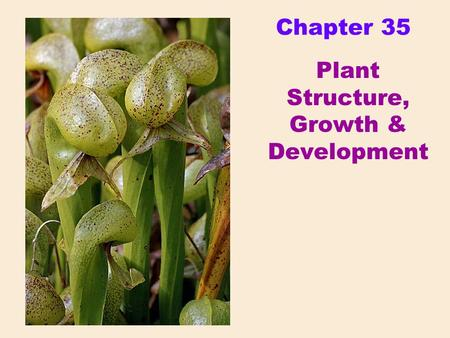 Chapter 35 Plant Structure, Growth & Development.