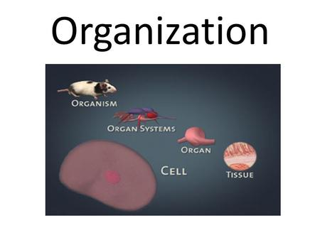 Organization. Body Organization The body has an hierarchical organization. – Hierarchy is the arrangement of a particular set of items that are represented.