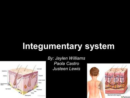 Integumentary system By: Jaylen Williams Paola Castro Justeen Lewis.
