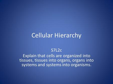 Cellular Hierarchy S7L2c