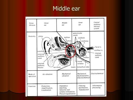 Middle ear.