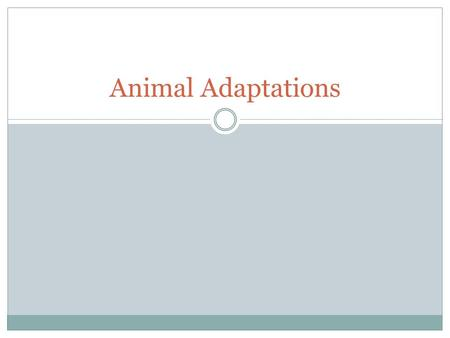 Animal Adaptations 0507.5.1 Identify physical and behavioral adaptations that enable animals such as amphibians, reptiles, birds, fish, and mammals to.