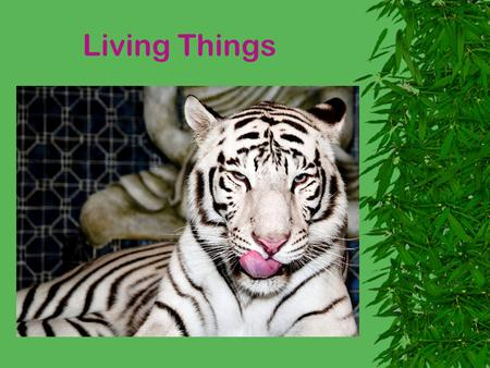 Living Things. Animals Plants ANIMALS Mammals Bugs Fish Birds Reptiles Amphibians.