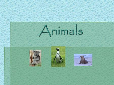 Animals Table of Contents  Mammals Mammals  Fish Fish  Amphibians Amphibians  Reptiles Reptiles  Insects Insects  Birds Birds.