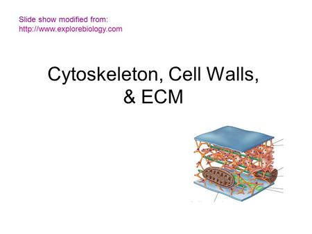 Cytoskeleton, Cell Walls, & ECM