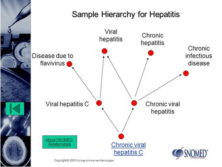 Copyright © 2001 College of American Pathologists Sample Hierarchy for Hepatitis Chronic viral hepatitis Chronic viral hepatitis C About SNOMED Relationships.