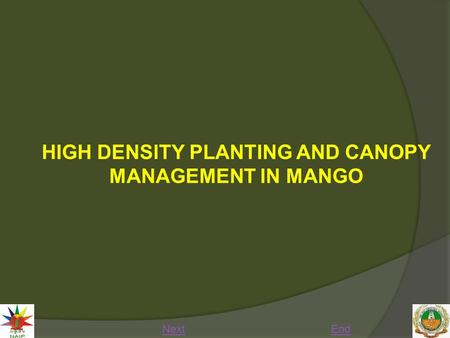 HIGH DENSITY PLANTING AND CANOPY MANAGEMENT IN MANGO NextEnd.