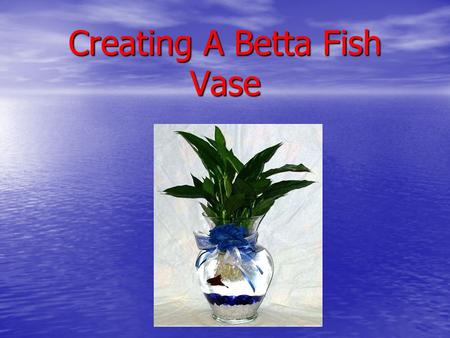 Creating A Betta Fish Vase. Supplies Needed! Colored Gemstones Fish Food.