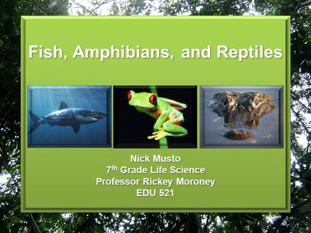 Fish, Amphibians, and Reptiles Nick Musto 7 th Grade Life Science Professor Rickey Moroney EDU 521.